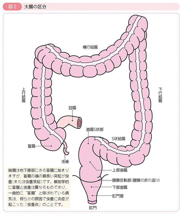大腸の区分